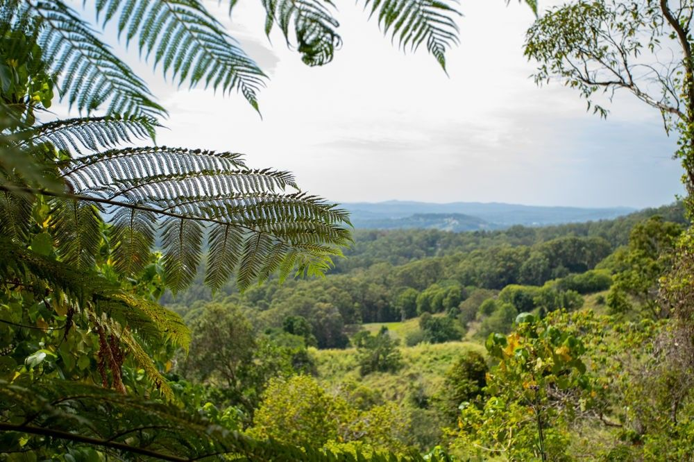 47-65 Thompson Road, Dulong QLD 4560, Image 0
