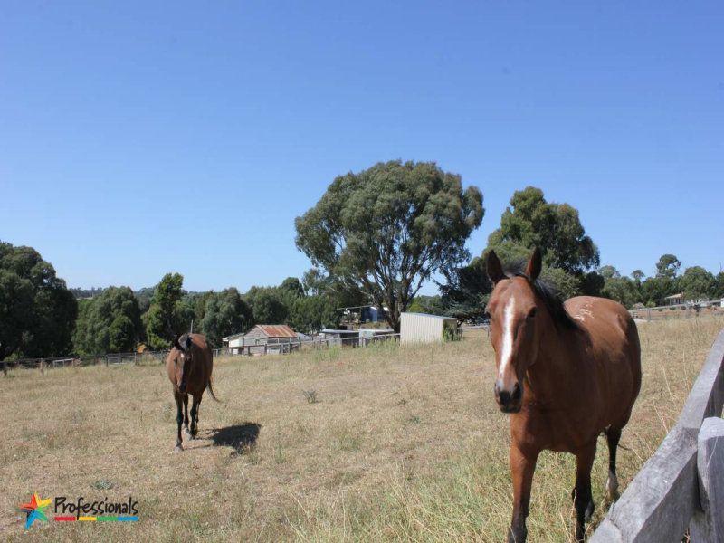 7 Alfred Lane, Neville NSW 2799, Image 2