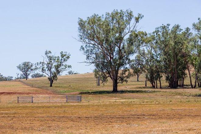 """Picture of """"Warrah Ridge Grazing"""", QUIRINDI NSW 2343"""