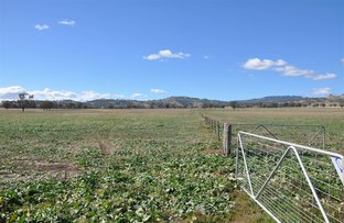 Picture of 763 Warrah Creek Rd, 'Springfield', Willow Tree NSW 2339