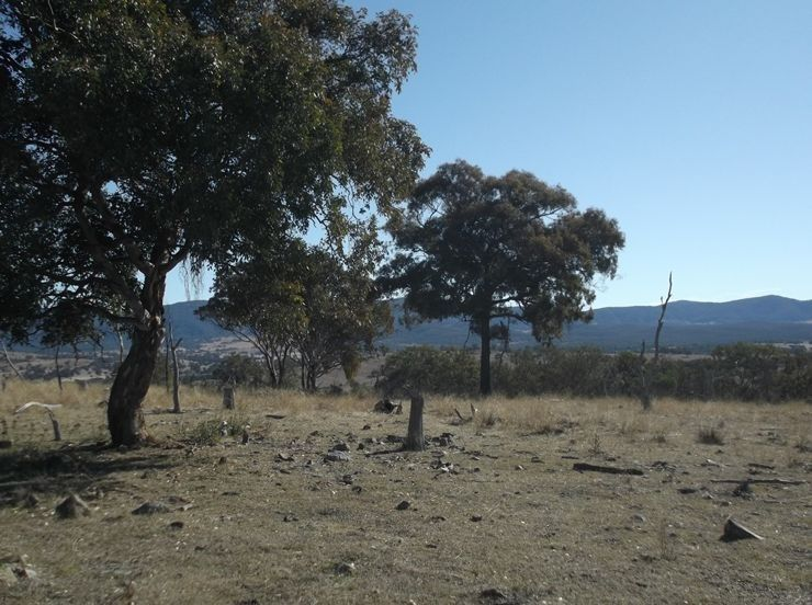 Lot 563 Tarban Road, Tenterfield NSW 2372, Image 1