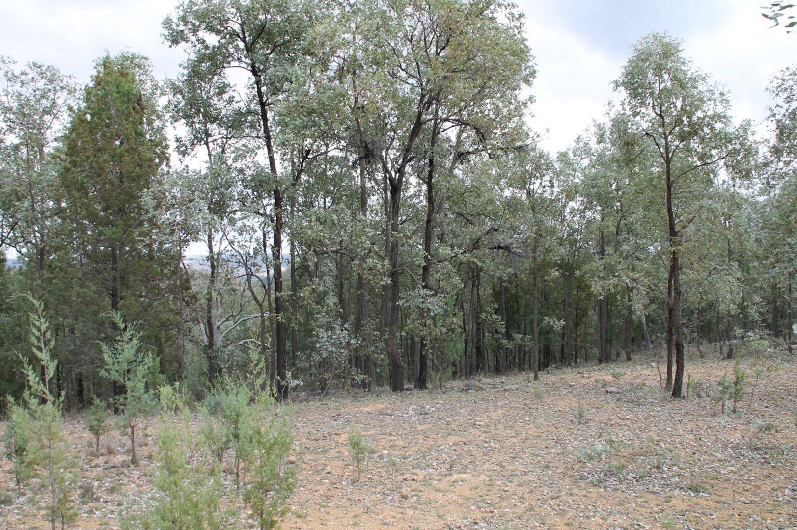 Lot 19 Mountain Creek Road, Tenterfield NSW 2372, Image 1