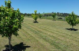 Picture of Newbridge NSW 2795