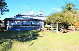 Picture of 1115 Cathundral Rd, Trangie NSW 2823