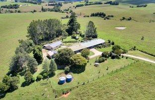 Picture of 392 Rocky Creek Road, Bielsdown Hills NSW 2453