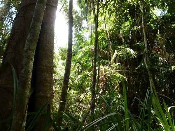 Etty Bay QLD 4858, Image 1