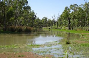 Picture of 448 MOIRA LAKES ROAD, Barmah VIC 3639