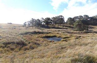 PIGGERY ROAD, Red Range NSW 2370