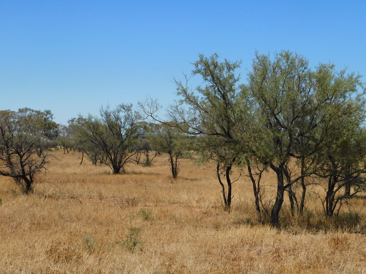 Lot 155 Gulf View Road, Napperby SA 5540, Image 1