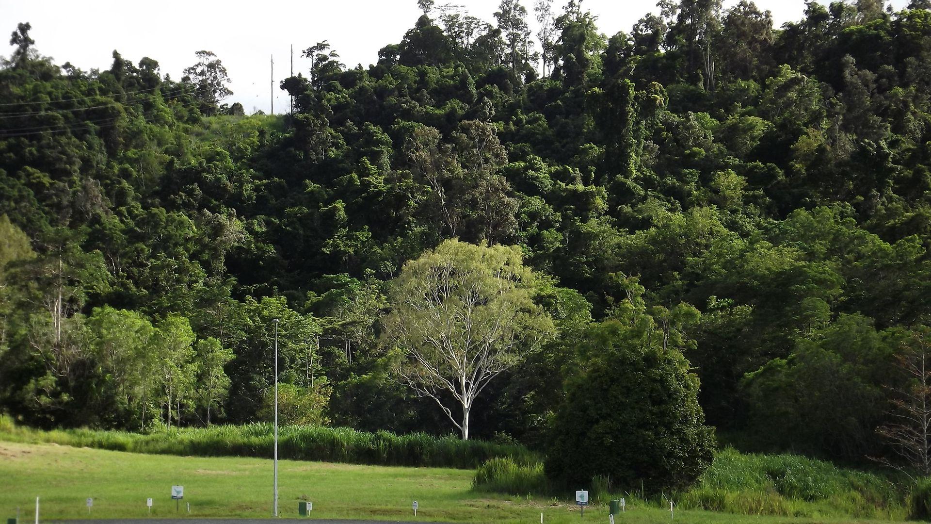 105 Telford Road, Strathdickie QLD 4800, Image 2