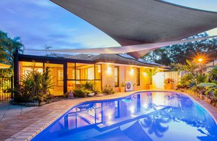 Picture of 11 Tuckeroo Pl, Reedy Creek QLD 4227