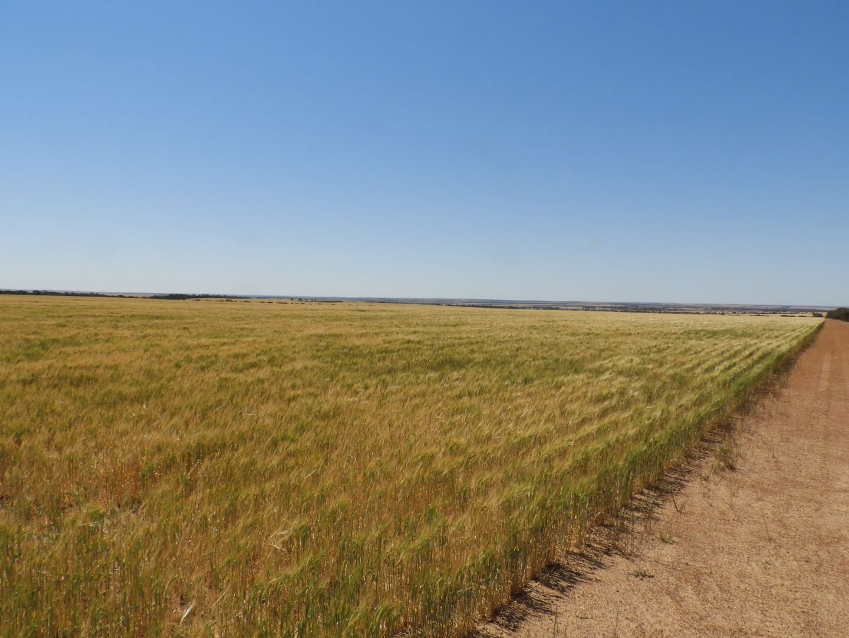 EDL Farms, Lake Magenta, Newdegate WA 6355, Image 2