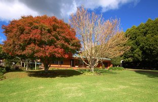 Tyringham Rd, Dorrigo NSW 2453