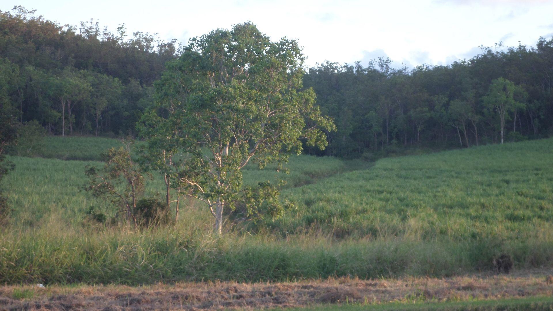 Mirani QLD 4754, Image 2
