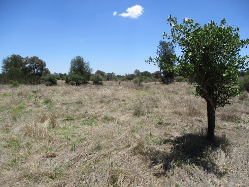 1279 Acres Brigalow Country, The Gums QLD 4406, Image 2