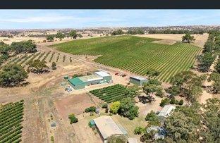 Picture of 82 Koop Creek Road (Springton Hills Wines), Springton SA 5235