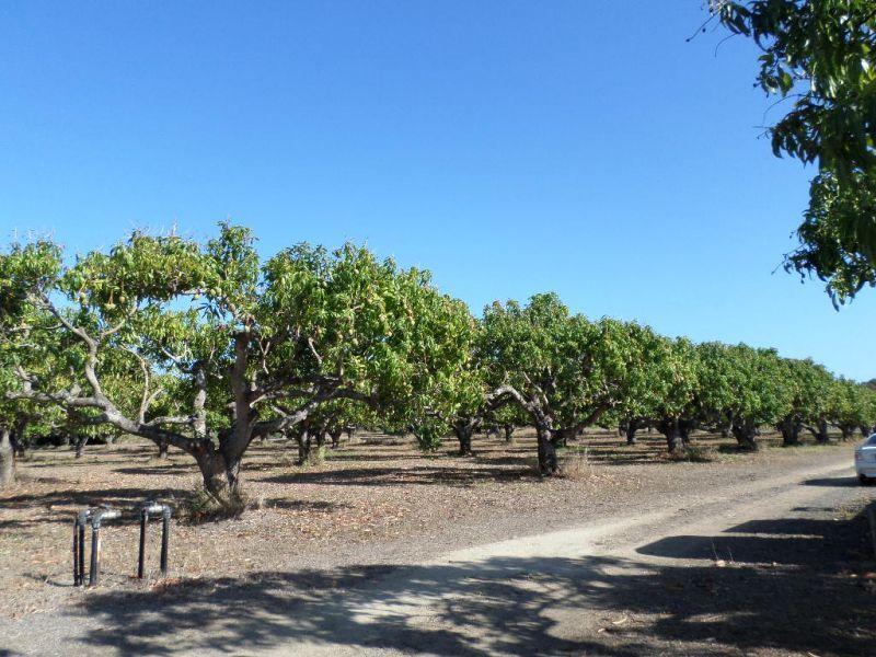 299 Inverdon Road, Bowen QLD 4805, Image 1