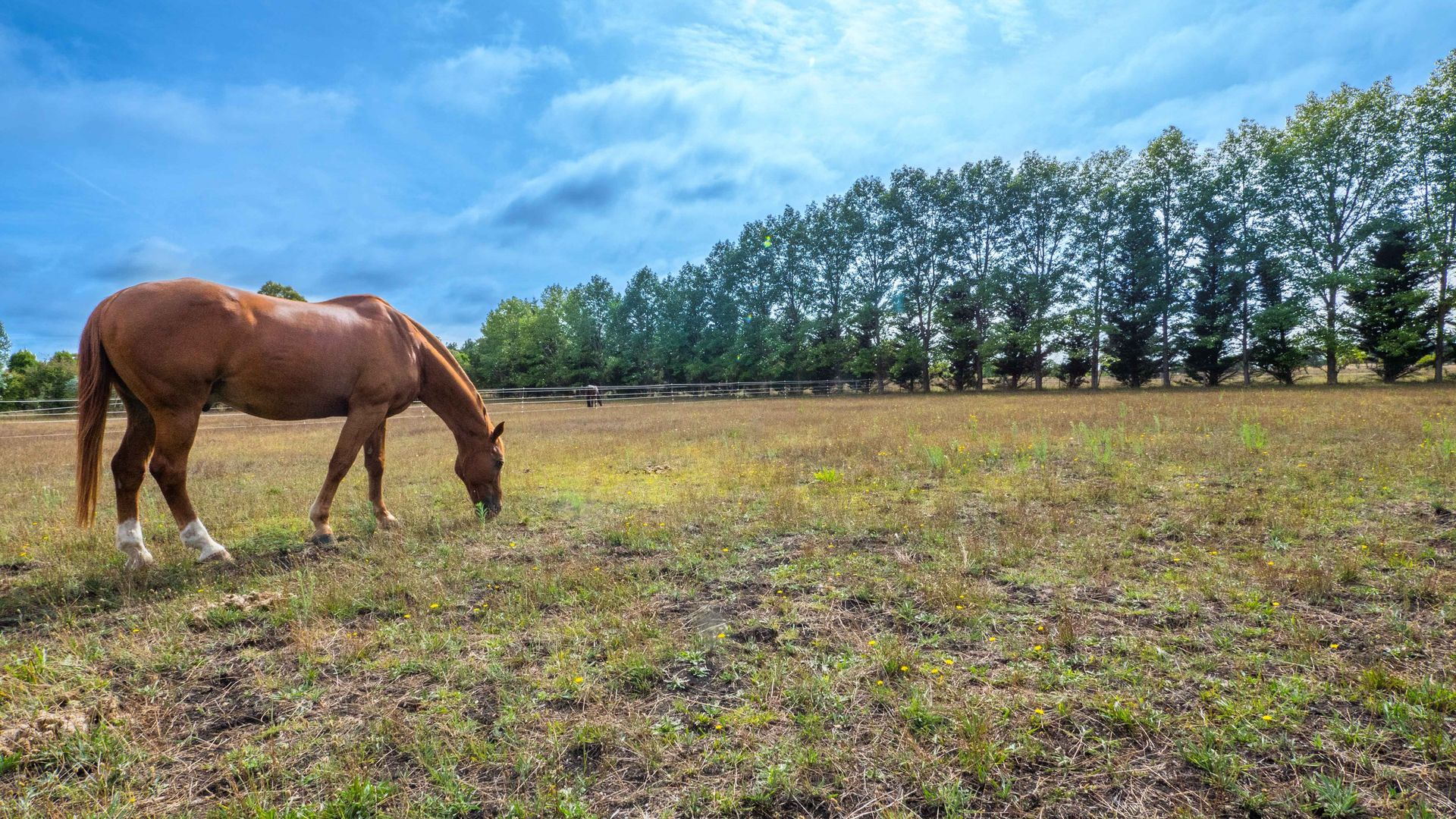 Lot 101 The Pines Estate, Armidale NSW 2350, Image 1