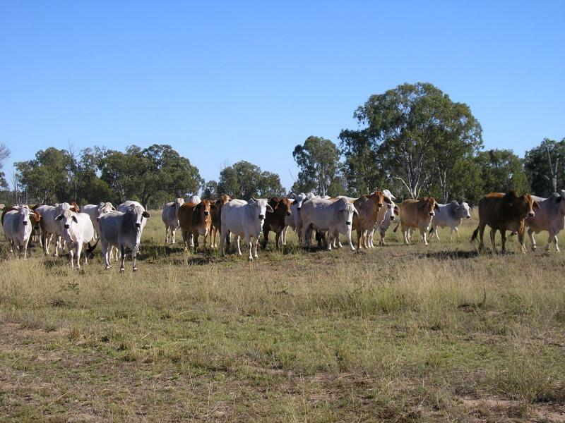 2194 acres North of, Jandowae QLD 4410, Image 1