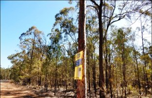 Picture of Lot 17 Rosella Avenue, The Pines QLD 4357