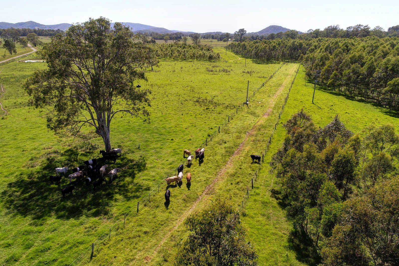 Firefly NSW 2429, Image 2
