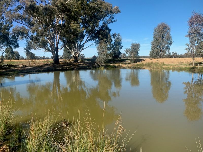 Lower River  Road, Tocumwal NSW 2714, Image 1