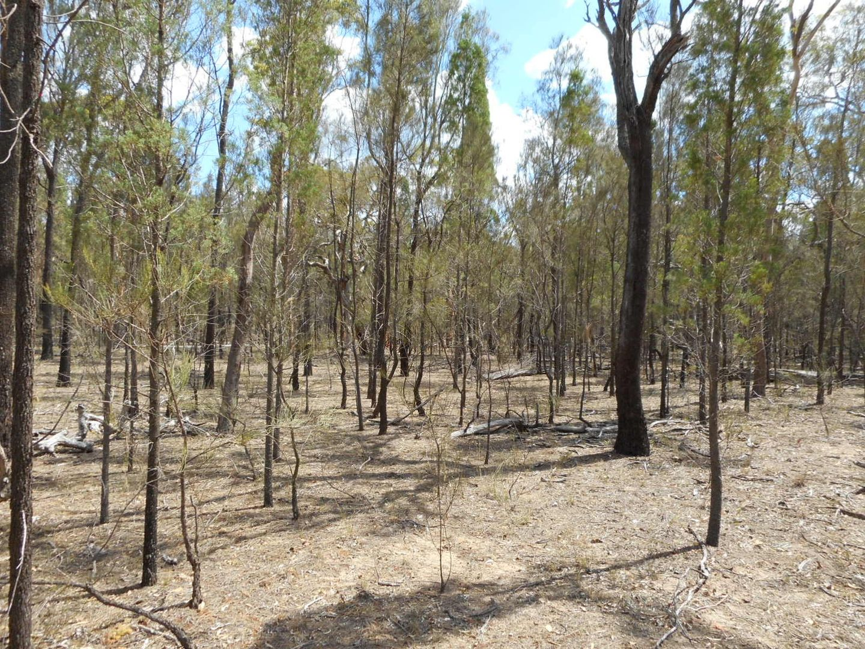 28 Cypress Avenue, Millmerran Woods QLD 4357, Image 0