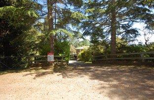 Picture of 618 Maynards Plains Rd, Dorrigo NSW 2453