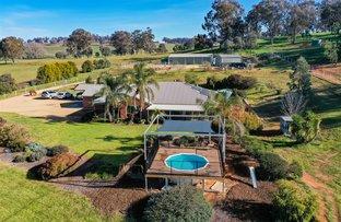 Picture of 'Yarrum Park' 48 Beatrice Road, Burrumbuttock NSW 2642