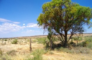 Picture of Section 122 McConville Road, Quorn SA 5433