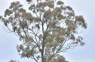4595 Old Cootamundra Road, Temora NSW 2666