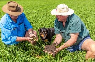 Picture of Jimbour Plain Farming Aggregation, Jimbour East QLD 4406