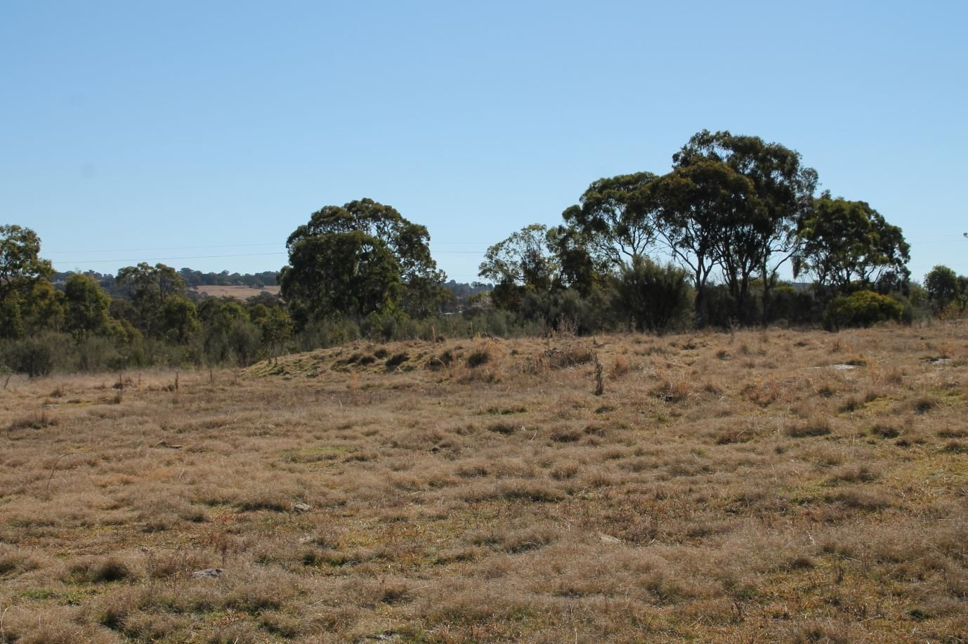 Lot 548 Rouse Street, Tenterfield NSW 2372, Image 1