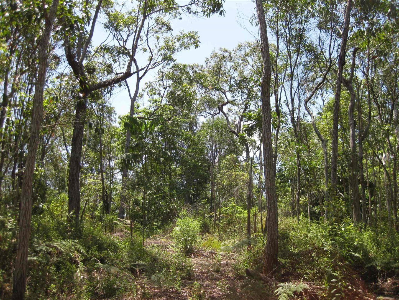 0 Tully-Mission Beach Road, East Feluga QLD 4854, Image 1