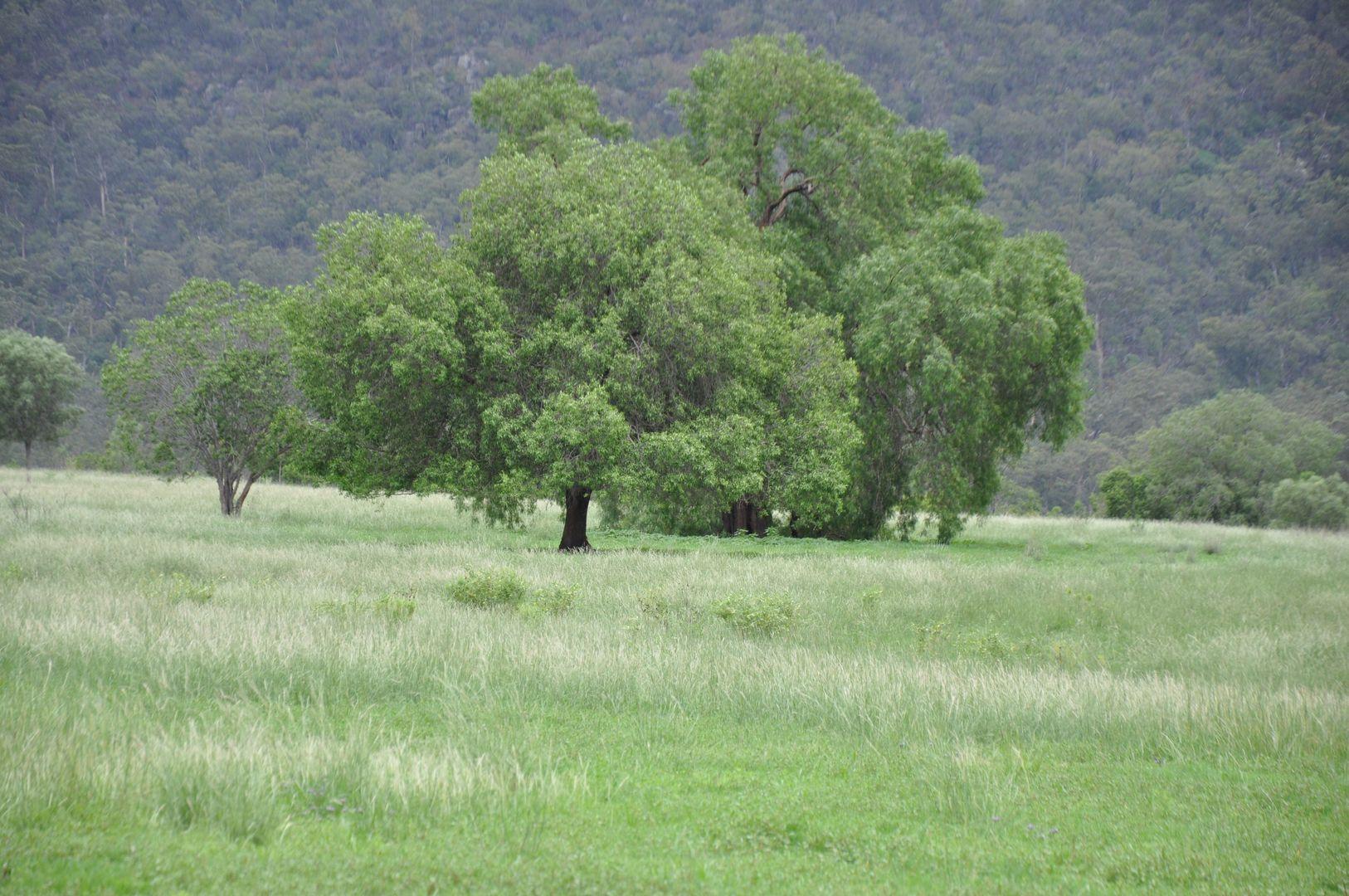 304 Doyles Creek Road, Doyles Creek NSW 2330, Image 1