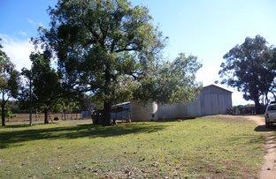552 MOLLYANNE ROAD, Binnaway NSW 2395
