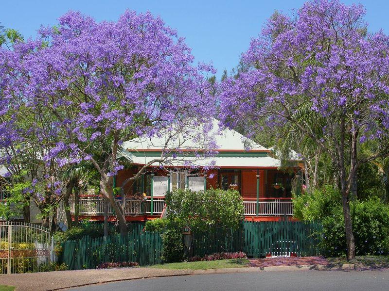 19 Wattle Avenue, Yeerongpilly QLD 4105, Image 0
