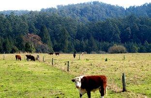 1343 Kalang Road, Bellingen NSW 2454
