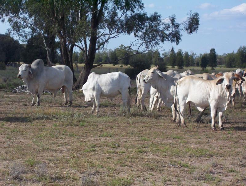 1280 acres at Columboola via, Miles QLD 4415, Image 2