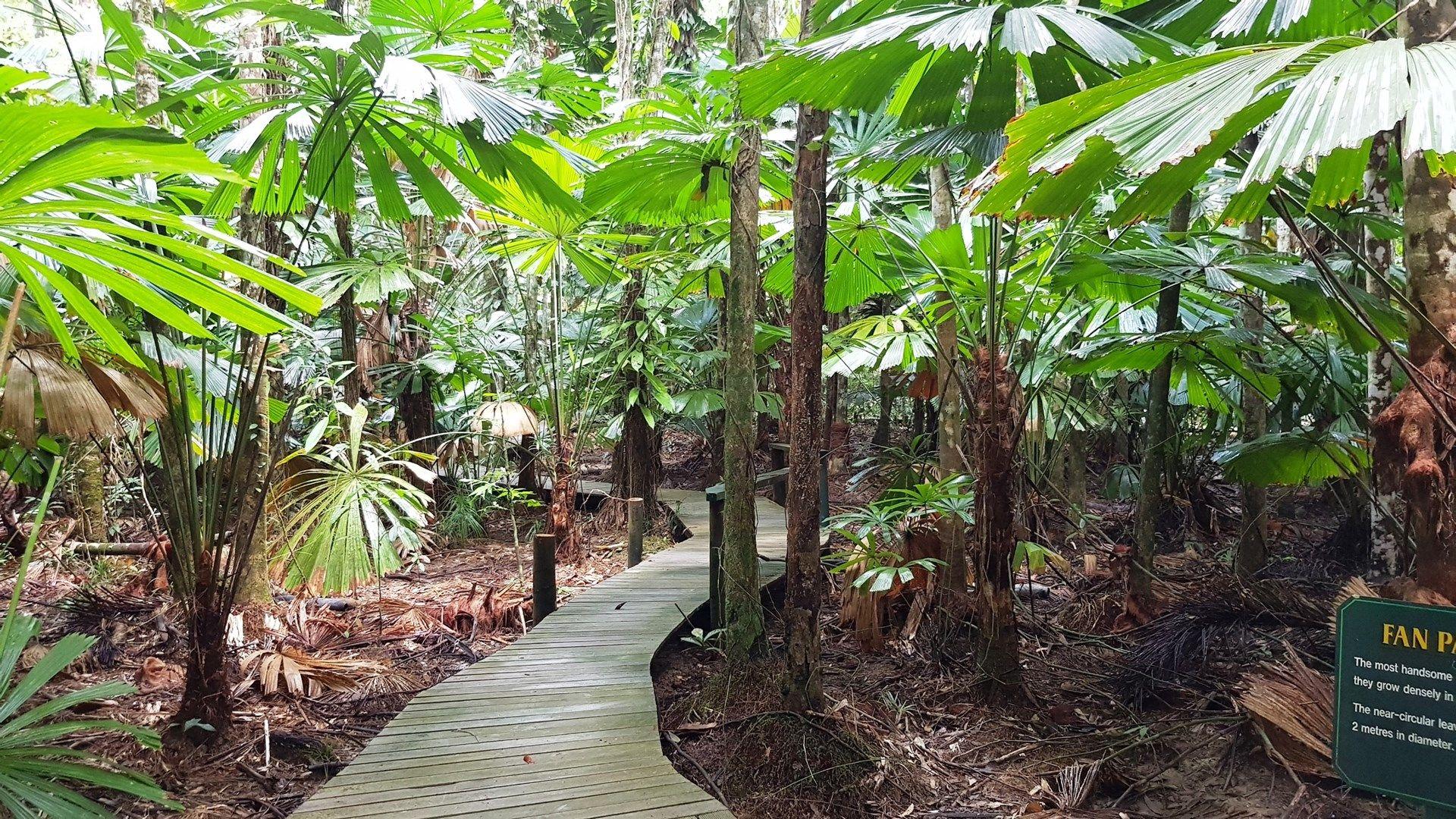 80 Cape Trib Road, Daintree QLD 4873, Image 0