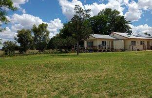 Picture of 1748 MOLLYAN ROAD, Mendooran NSW 2842