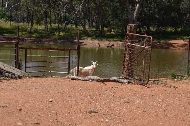 Picture of * Glenhaven Park, COBAR NSW 2835