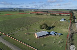 Picture of 137 Griffins Road, Coghills Creek VIC 3364