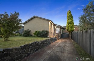 Picture of 11 Clangula Court, Endeavour Hills VIC 3802