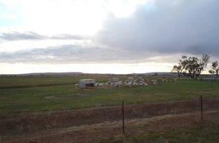 Picture of FARM 209 VANCE ROAD, Leeton NSW 2705