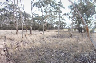 Picture of Lot 101 Dunstall Road, Bordertown South SA 5268