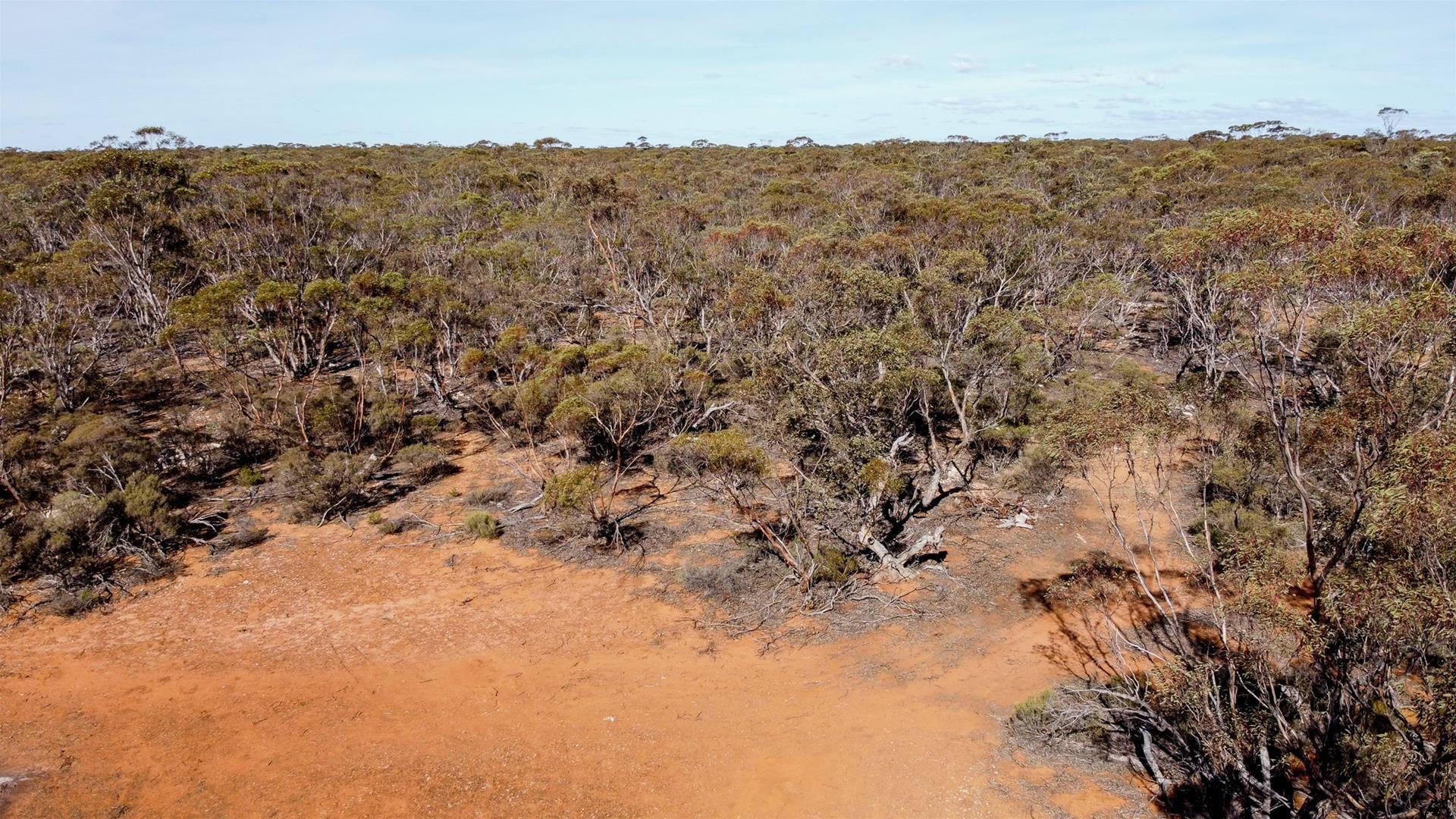 Murraylands Road, Black Hill SA 5353, Image 1