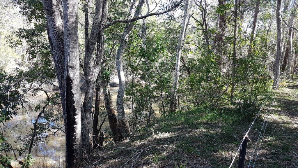 7041 Summerland Way, Myrtle Creek NSW 2469, Image 2