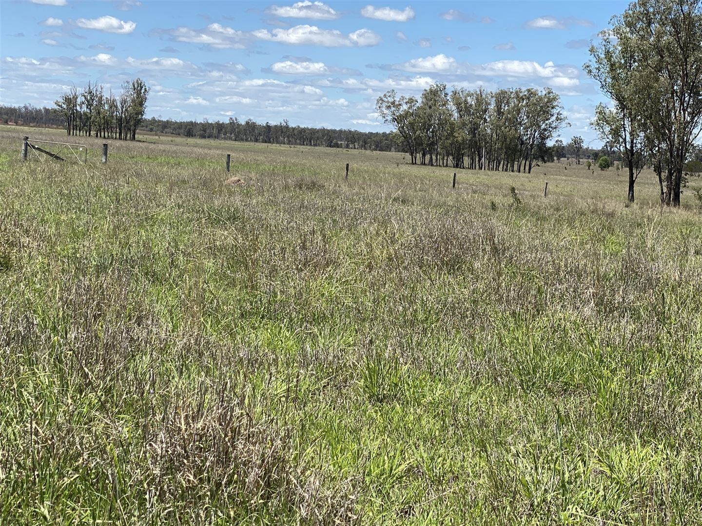 Durong QLD 4610, Image 2