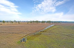 Picture of Alton Downs QLD 4702